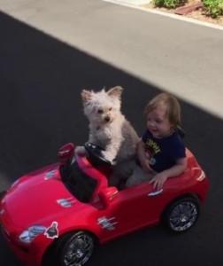 Hund fährt
