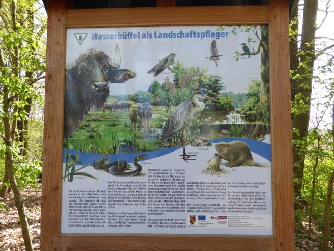 Tegeler Fließ-Naturschutz