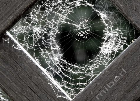Spinnennetz im Mai