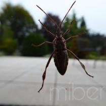 Käfer an scheibe.jpg