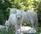 wolfsruhe